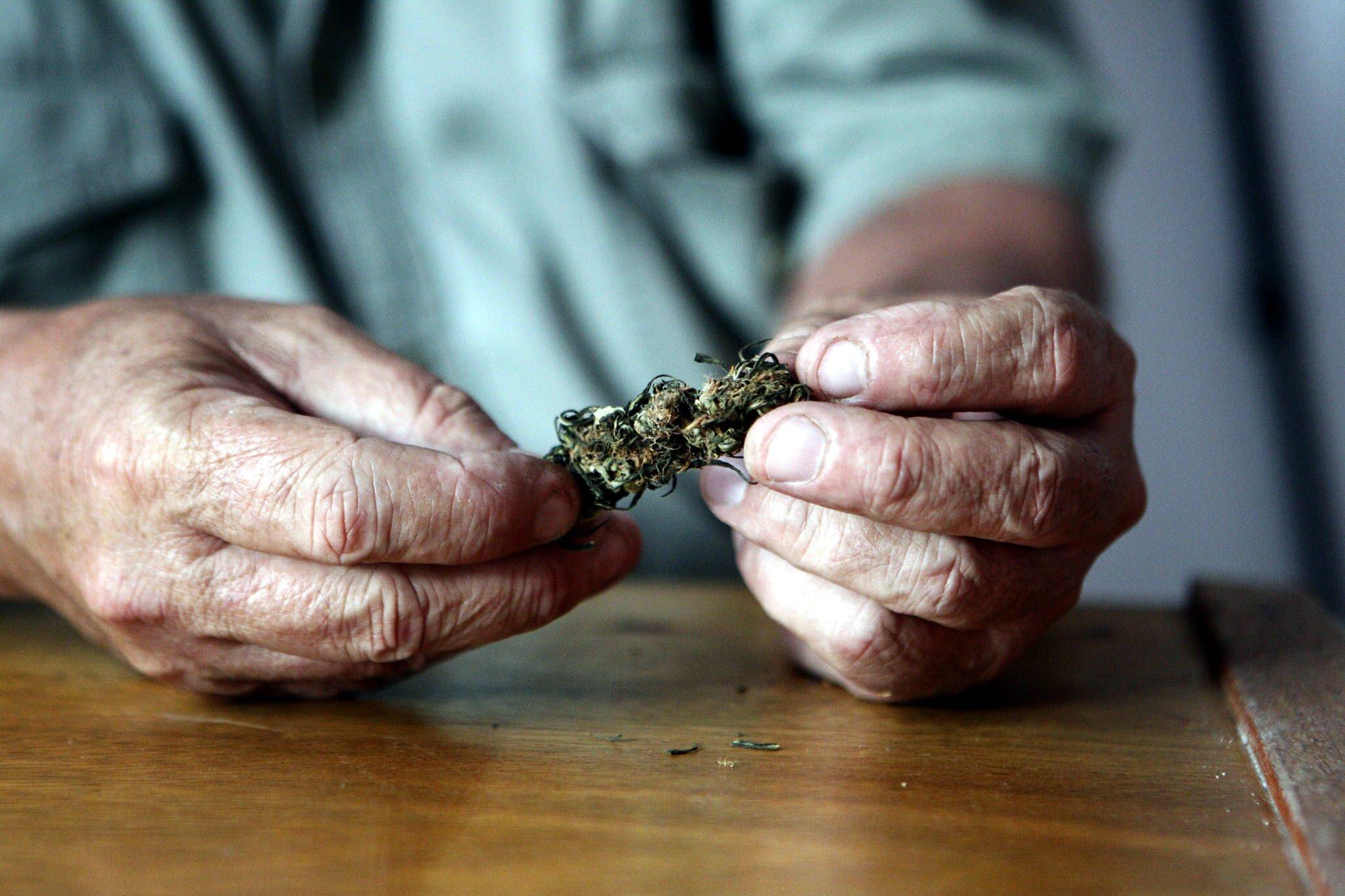 Desde este martes entra en vigor legalización de la marihuana medicinal en Florida