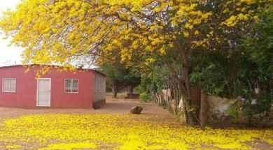 flores_amarillas_229967663514_6407217476470974489_n.jpg_921236177.jpg