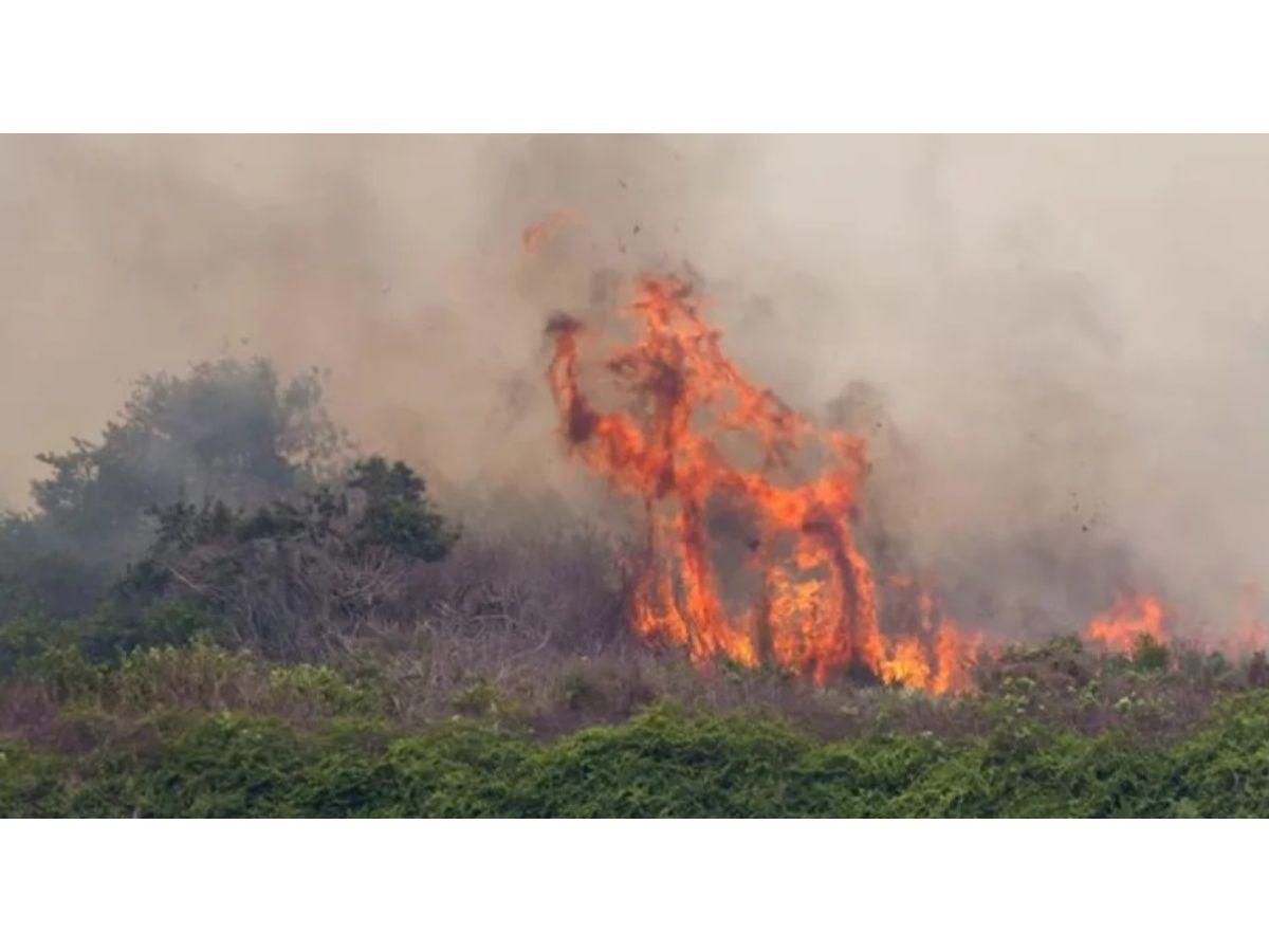 declaran estado de emergencia en Florida por más de 100 incendios forestales