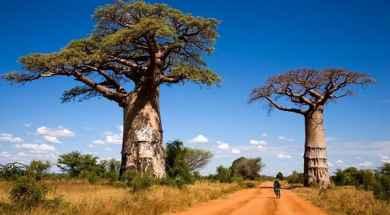 arboles-baobab-600×342.jpg