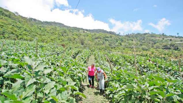 Plan Nacional de Reforestación 2017 inicia en Mérida con la siembra de 1.000 plantas