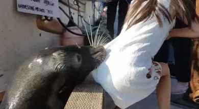 leon-marino-ataca.jpg