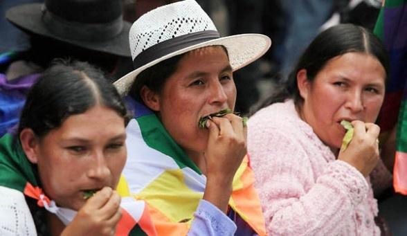 Hoja-de-Coca-Bolivia.jpg
