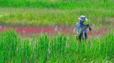 ecologist.jpg_271325807.jpg