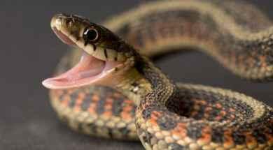 comunicacion-en-combate-entre-serpientes.jpg